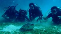 Certified Guided Reef Dive in St Thomas, St Thomas, Scuba Diving