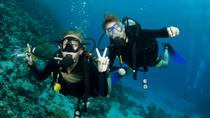 Certified Night Dive in St Thomas, St Thomas, Attraction Tickets