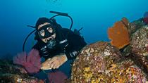 3-Day Cabo San Lucas Diving Package , Los Cabos, Scuba Diving