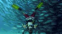 Cabo Pulmo Full Day Dive Tour , Los Cabos, Scuba Diving