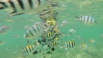 Glass Bottom Boat Excursion with Snorkeling from Diani Beach, Diani Beach, Day Cruises