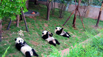 13-Day Grand China with Pandas Join-in Tour: Beijing, Xian, Chengdu, Yangtze River Cruise and ...
