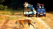 6-Night Golden Triangle Tour with Ranthambore from Delhi, New Delhi, Multi-day Tours