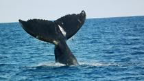 Whale Watching on Taboga and Taboguilla Islands, Panama City