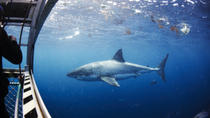 Great White Shark Cruise with Optional Cage Dive and Aqua Sub from Port Lincoln, Port Lincoln, Day ...