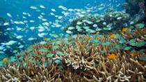 4-Day Bali Underwater Wonderland Tour: Tulamben Diving, Sidemen and Tirta Gangga, Bali, Scuba Diving