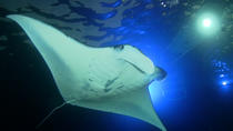 Manta Ray Night Snorkel Big Island Hawaii, Big Island of Hawaii, Snorkeling