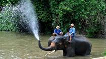 3-Day Lampang Tour with Thai Elephant Conservation Center Homestay Experience, Chiang Mai, ...