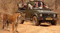 Private Tour: 2-Day Ranthambore National Park from Jaipur, Jaipur