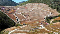 Wine and Gastronomy Tour from Dubrovnik, Dubrovnik, Wine Tasting & Winery Tours