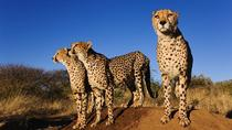 7-Day Western Cape and Namibia Experience from Mossel Bay, Western Cape, Multi-day Tours