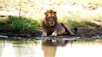2 Nights Lion King Safari to Kruger from Nelspruit, Kruger National Park, Multi-day Tours