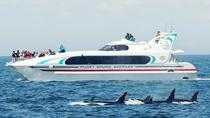 Seattle Whale Watching Tour, Seattle, Dolphin & Whale Watching
