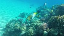 Snorkeling Trip to Tiran island by boat from Sharm El Sheikh, Sharm el Sheikh, Day Cruises