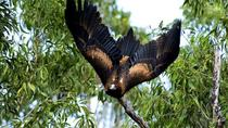 5-Day Cunnamulla Outback Wildlife Backpacking Tour from Brisbane, Brisbane, Multi-day Tours