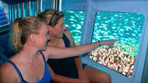 Cayman Islands Submarine Tour plus Turtle Encounter , Cayman Islands, Half-day Tours