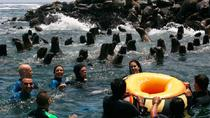 Palomino Islands Tour Plus Swimming with Sea Lions Experience, Lima