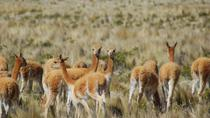 Private 2-Day Colca Canyon Tour from Arequipa to Puno, Arequipa