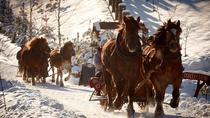 Horse Sleigh Ride in Polish Countryside, Krakow