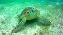Private Tour: Akumal Marine Turtle Snorkeling from Cozumel, Cozumel, Scuba & Snorkelling