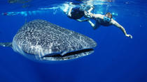Private Tour: Whale Shark Adventure from Cancun and Riviera Maya, Cancun, Ferry Services