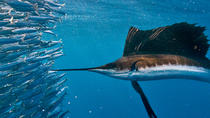 Swim with Sailfish Tour in Isla Mujeres, Cancun, Dolphin & Whale Watching