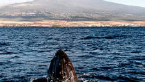 12 PM Humpback Whale Tales on the Kona-Kohala Coast in Kawaihae, Big Island of Hawaii, Day Cruises