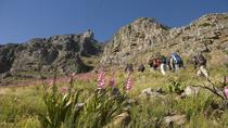 Private Hiking Tour of Table Mountain , Cape Town, Hiking & Camping
