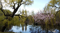 Scenic Central Park Walking Tour, New York City, Bike & Mountain Bike Tours