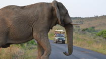 Hluhluwe Imfolozi Game Reserve Day Tour from Durban, Durban, Safaris