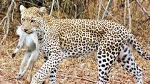 6-Day Wonderful Kruger National Park Safari from Johannesburg, Johannesburg, Multi-day Tours