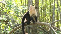 Mangrove Monkey Tour from Jaco, Jaco, Nature & Wildlife