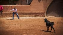 Bull Ranch Visit and Lunch with Optional Torero Training, Pamplona, Once in a Lifetime Experiences