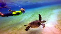 Morning Deluxe Kayak and Snorkel tour 8am, Big Island of Hawaii, Scuba & Snorkelling