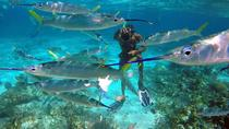 Falmouth Shore Excursion: Doctor's Cave Beach and Snorkeling Private Tour, Falmouth, Western...