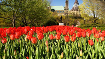 4-Day Canada Tulip Festival Journey from New Hampshire, Manchester, Multi-day Tours