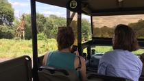 Private Morning Safari in Kruger Park from Hazyview, Kruger National Park, Private Tours
