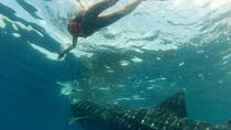 Whale Shark Tour from Holbox Island, Isla Holbox, Dolphin & Whale Watching
