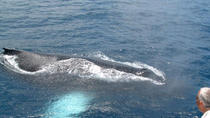 St Lucia Whale and Dolphin Watching Cruise, St Lucia, Dolphin & Whale Watching
