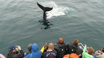 Newfoundland Puffin and Whale Watch Cruise, St John's, Dolphin & Whale Watching