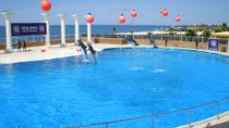 Dolphin Show at Sealanya from Side, Side, Family Friendly Tours & Activities