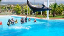 Swim with Dolphins at Sealanya Dolphinpark, Side