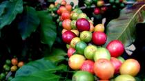Coffee Plantation and Ponce City Tour from San Juan, San Juan, Day Trips