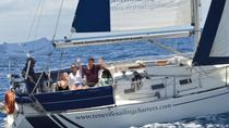 6 Hour Private Whale Watching and Sailing Tour in Tenerife, Tenerife, Sailing Trips