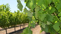 Margaret River Wine and Sights Discovery Tour from Busselton or Dunsborough, Margaret River, Wine ...