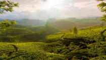 3-Day Private Tour of Tea Valley and Munnar Hill Station from Kochi, Kochi