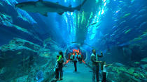 Underwater Zoo, Dubai Aquarium and Ice Rink Entrance Ticket, Dubai, Half-day Tours