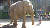 2-Day Thai Elephant Care Center Experience from Chiang Mai, Chiang Mai, Overnight Tours