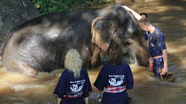 3-Day Thai Elephant Care Camp Experience from Chiang Mai, Chiang Mai, Multi-day Tours
