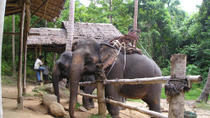 Elephant Camp and Jeep Safari Tour including Lunch from Phuket, Phuket, Nature & Wildlife